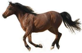 Horse Breeds List