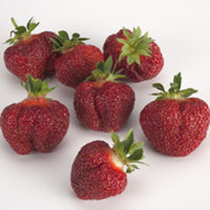 Brunswick - Strawberry Varieties