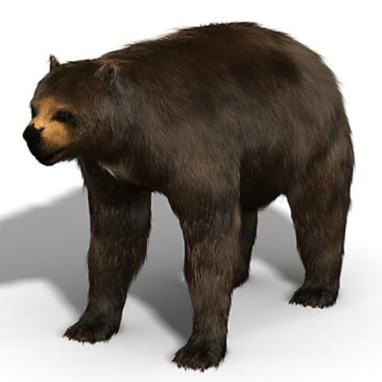 Giant Short-Faced Bear  - bears species | datvis jishebi | დათვის ჯიშები