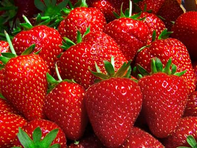 Elegance - Strawberry Varieties