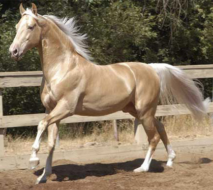 P Goat Names Horse Breeds - America...