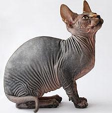 Cat Bib Australia