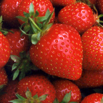 Clancy - Strawberry Varieties