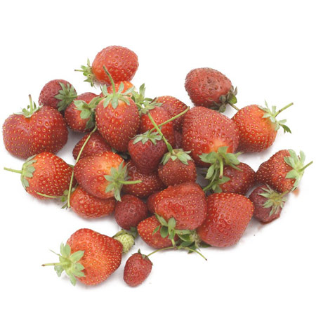 Allstar Strawberry  - Strawberry Varieties