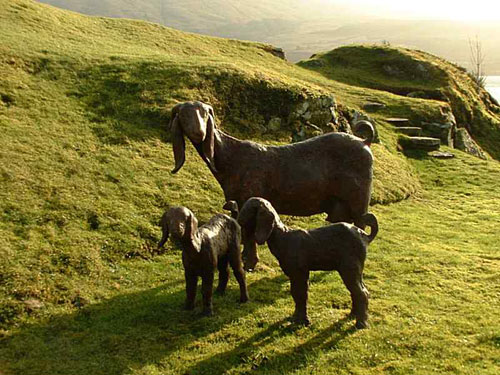 Goat breeds - Damascus Goats