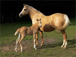 Alter-Real | Horse | Horse Breeds