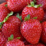 Monterey | Strawberry Species