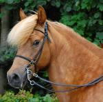 Aegidienberger | Horse | Horse Breeds