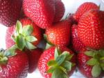 Vibrant | Strawberry Species