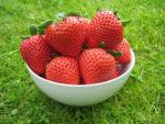 Cassandra - Strawberry  Varieties List list a - z