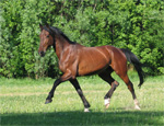Russian Trotter | Horse | Horse Breeds