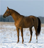 Don | Horse | Horse Breeds