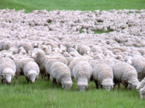 Home sheep home willkommen hier ihr szzen sheepworld pics for Lambs canyon cabins for sale